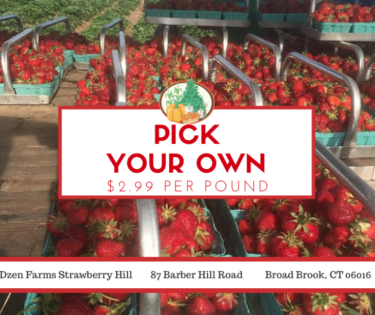 Looking For A Great Place To Pick-Your-Own Strawberries in CT? Dzen Farms in Broad Brook CT!