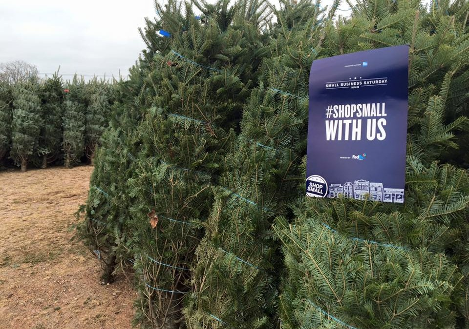 Christmas Trees Are Ready At Dzen Christmas Tree Farm in South Windsor Connecticut